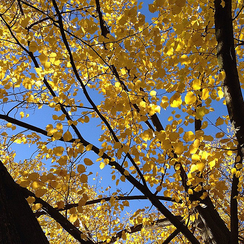 leaves_yellow