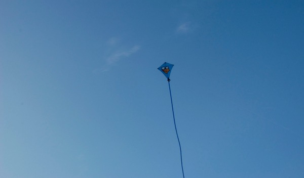 beach picnic kite