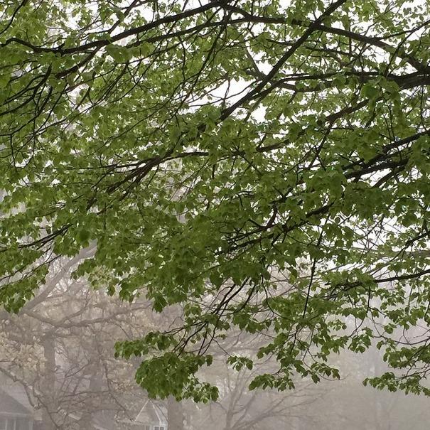 foggy morning in spring